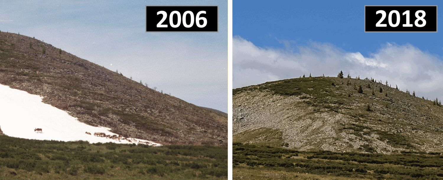 Image of a persistent snow and ice patch in Mengebulag taken in 2006, showing domestic reindeer using the patch, and (right); the same patch in 2018, which local residents indicated had melted for the very first time.