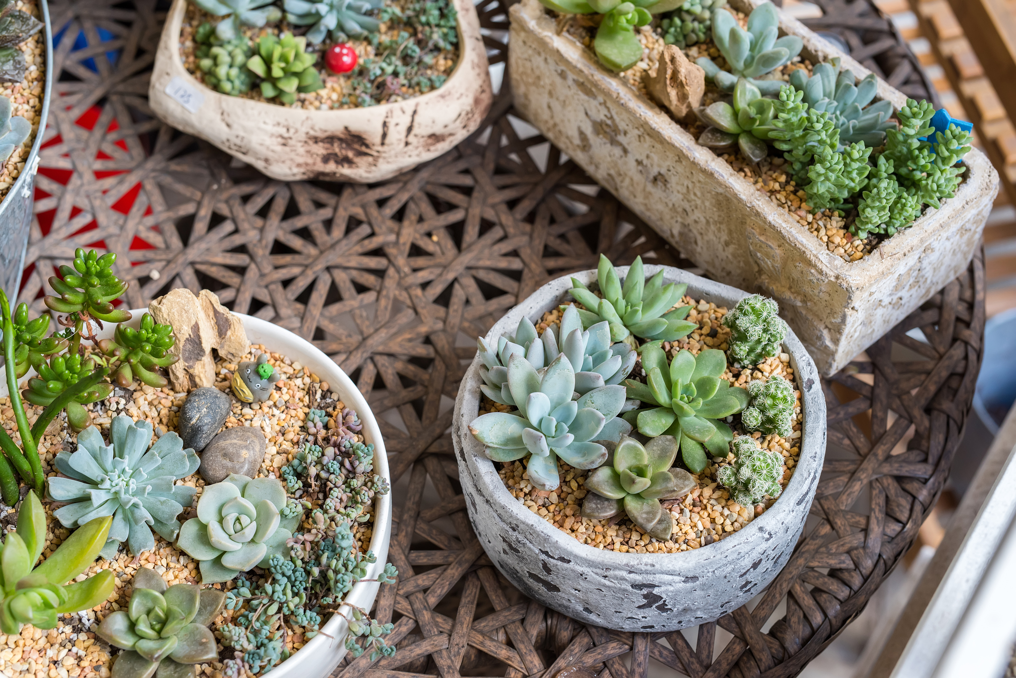 succulents in pots (iStock/PA)