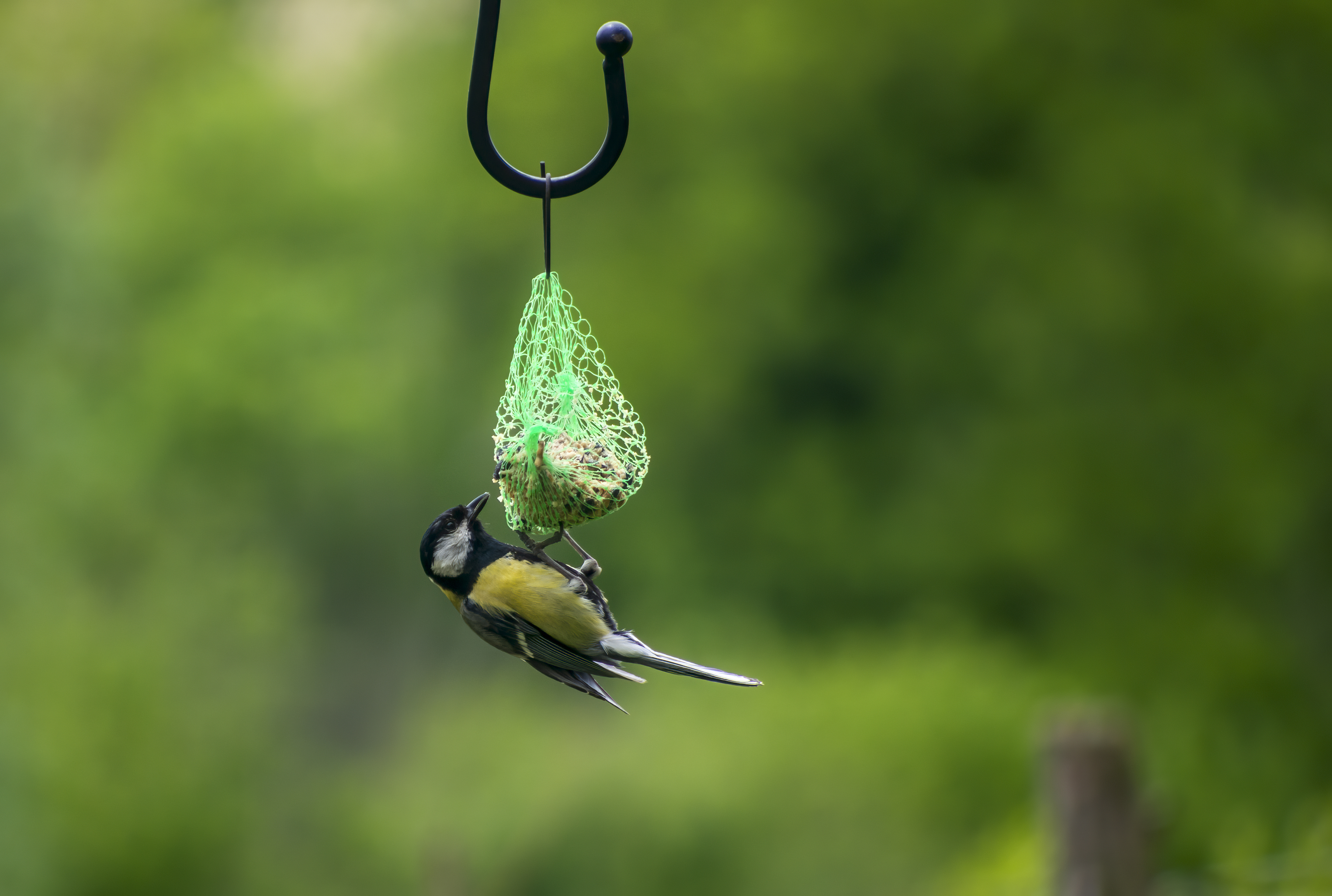 Birds can get trapped in plastic netting (iStock/PA)