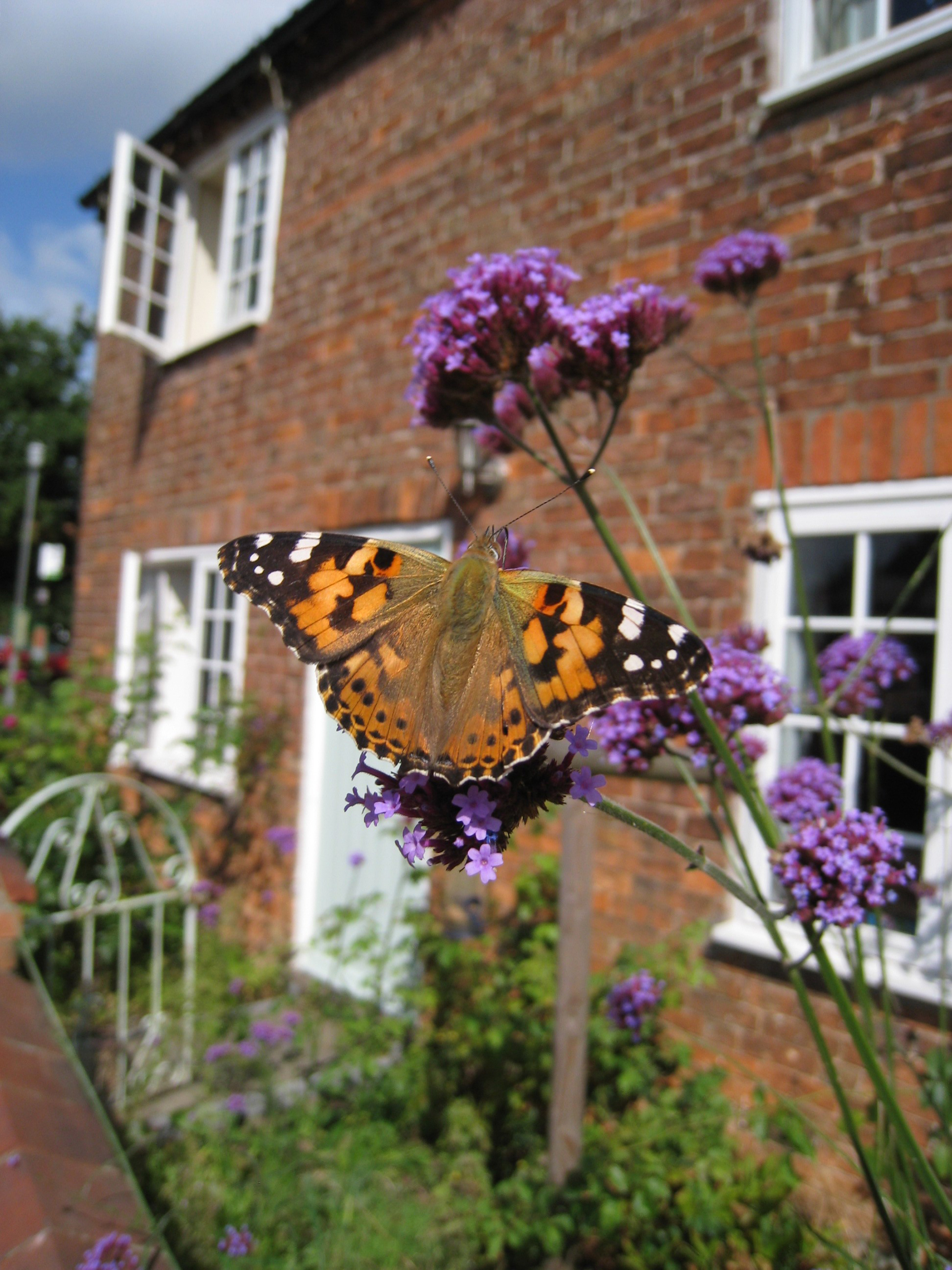 The painted lady flourishes in the warmer months (Adam Cormack/PA)