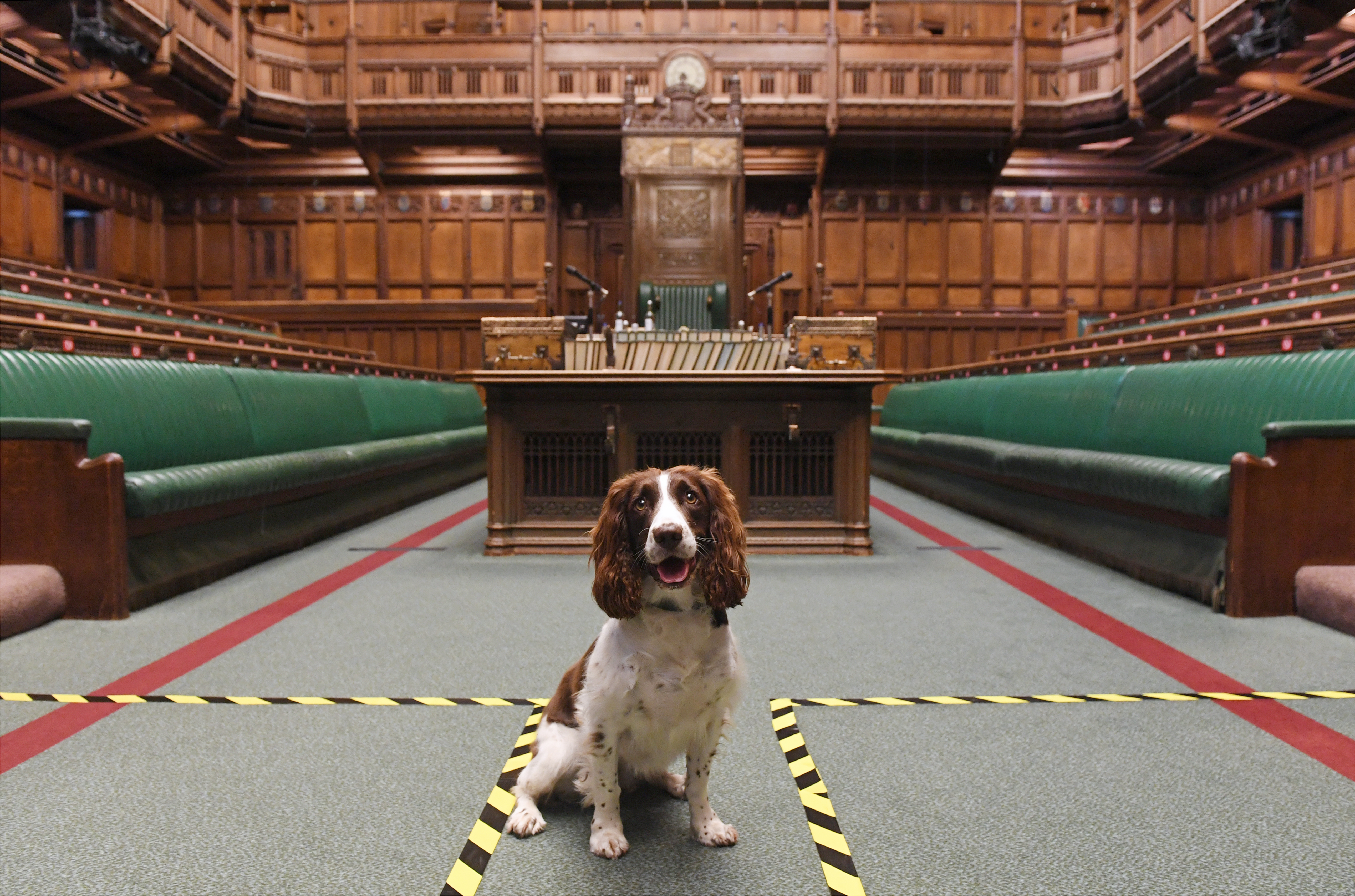 Five-year-old Poppy in the Commons