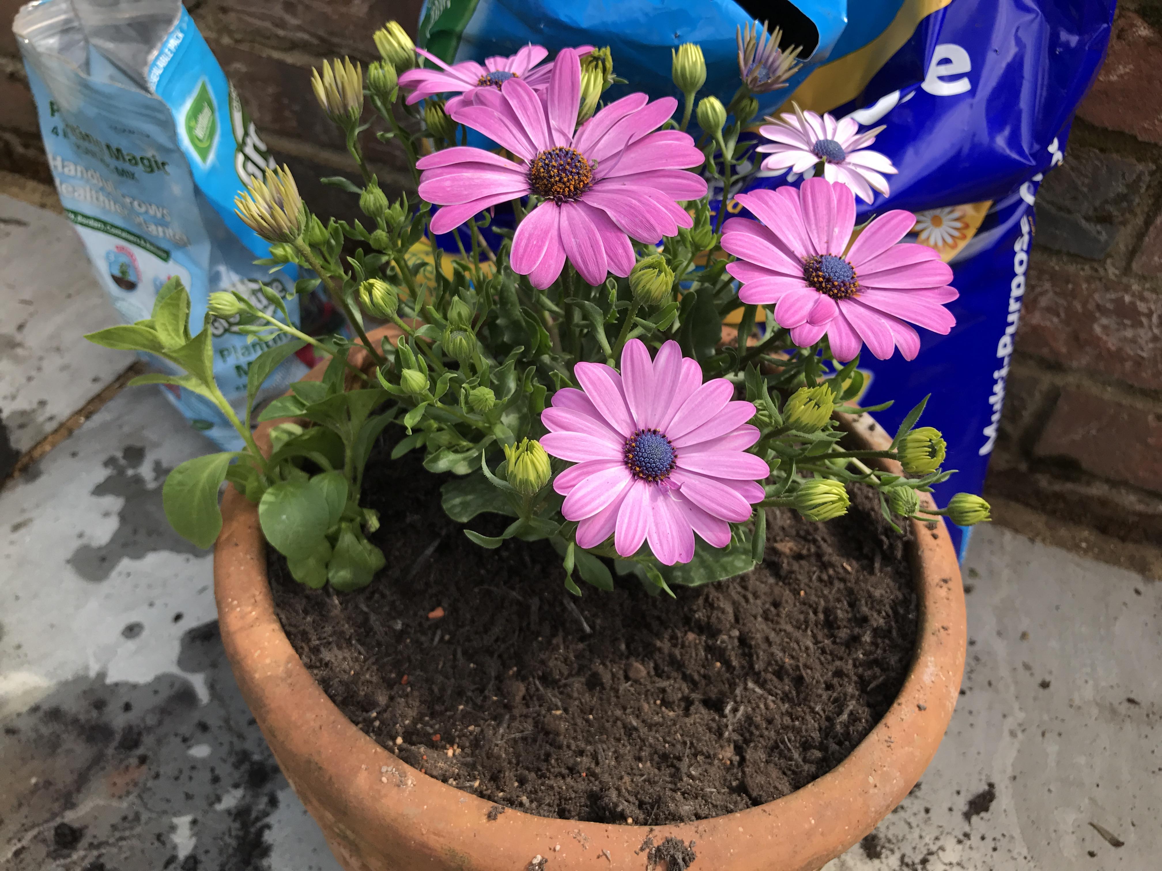 Start with the big plants (Hannah Stephenson/PA)