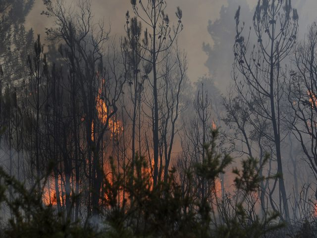Forest fires near the village of Figueiro dos Vinhos, central Portugal (Paulo Duarte/AP)