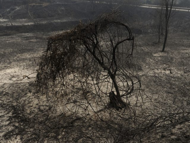 Wildfires are an annual scourge in Portugal (Paulo Duarte/AP)