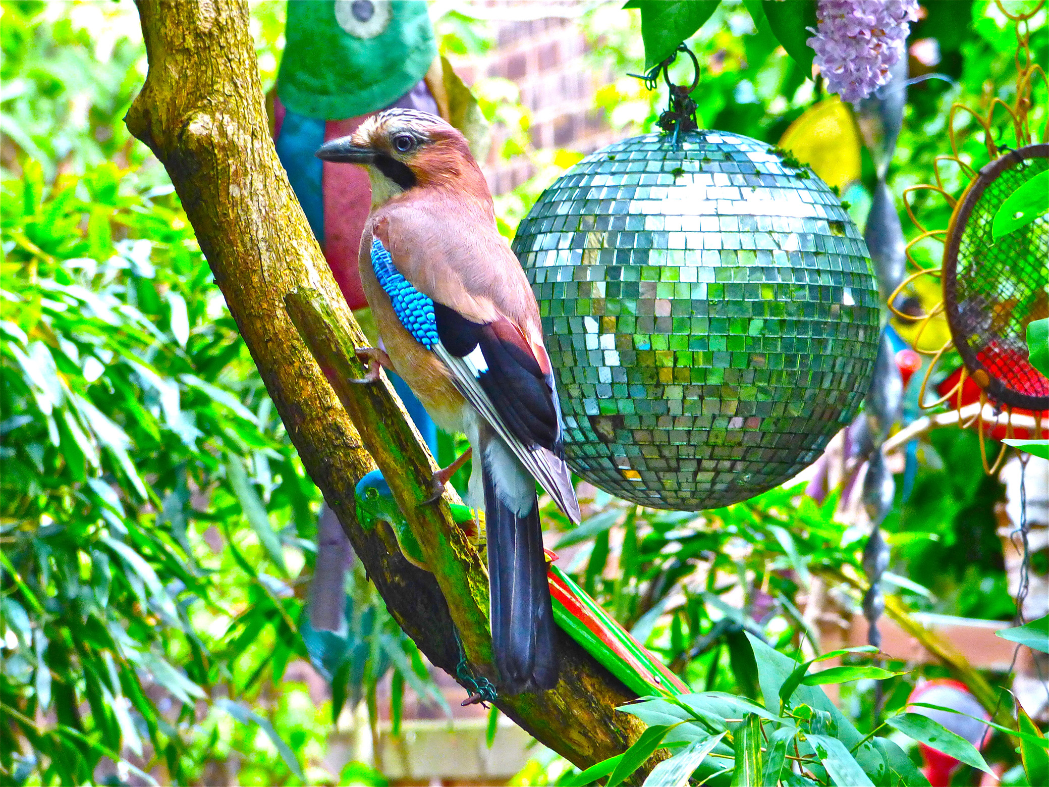 Quirky glitterball (Bill Oddie/PA)