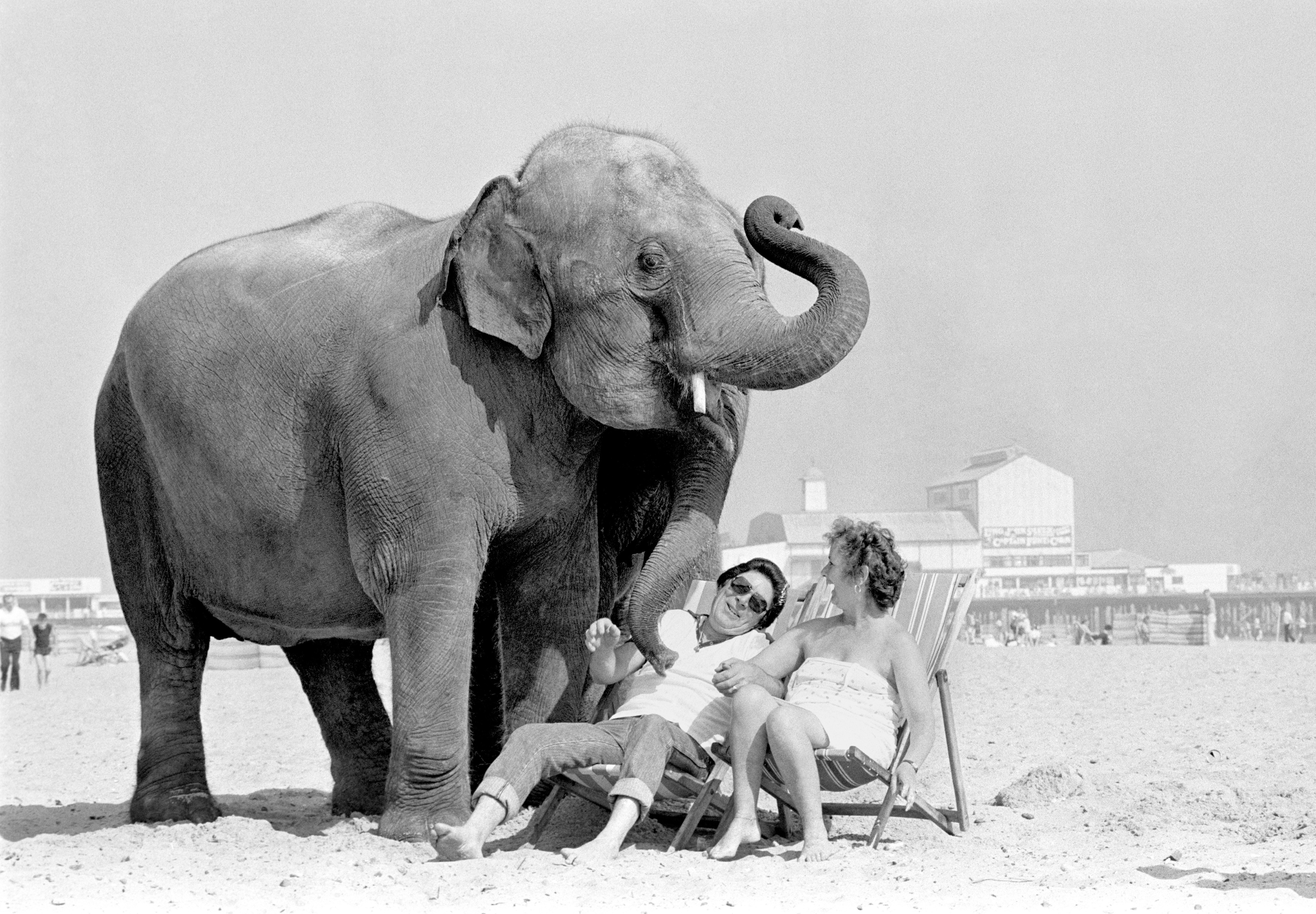 Circus elephant Sharon make friends with holidaymakers Graham and Janet Stead, of Stapleford, Notts, on the beach at Great Yarmouth.