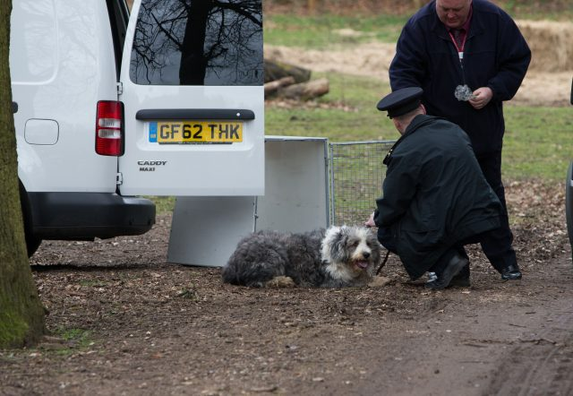 Calls for tougher sentences for animal abusers