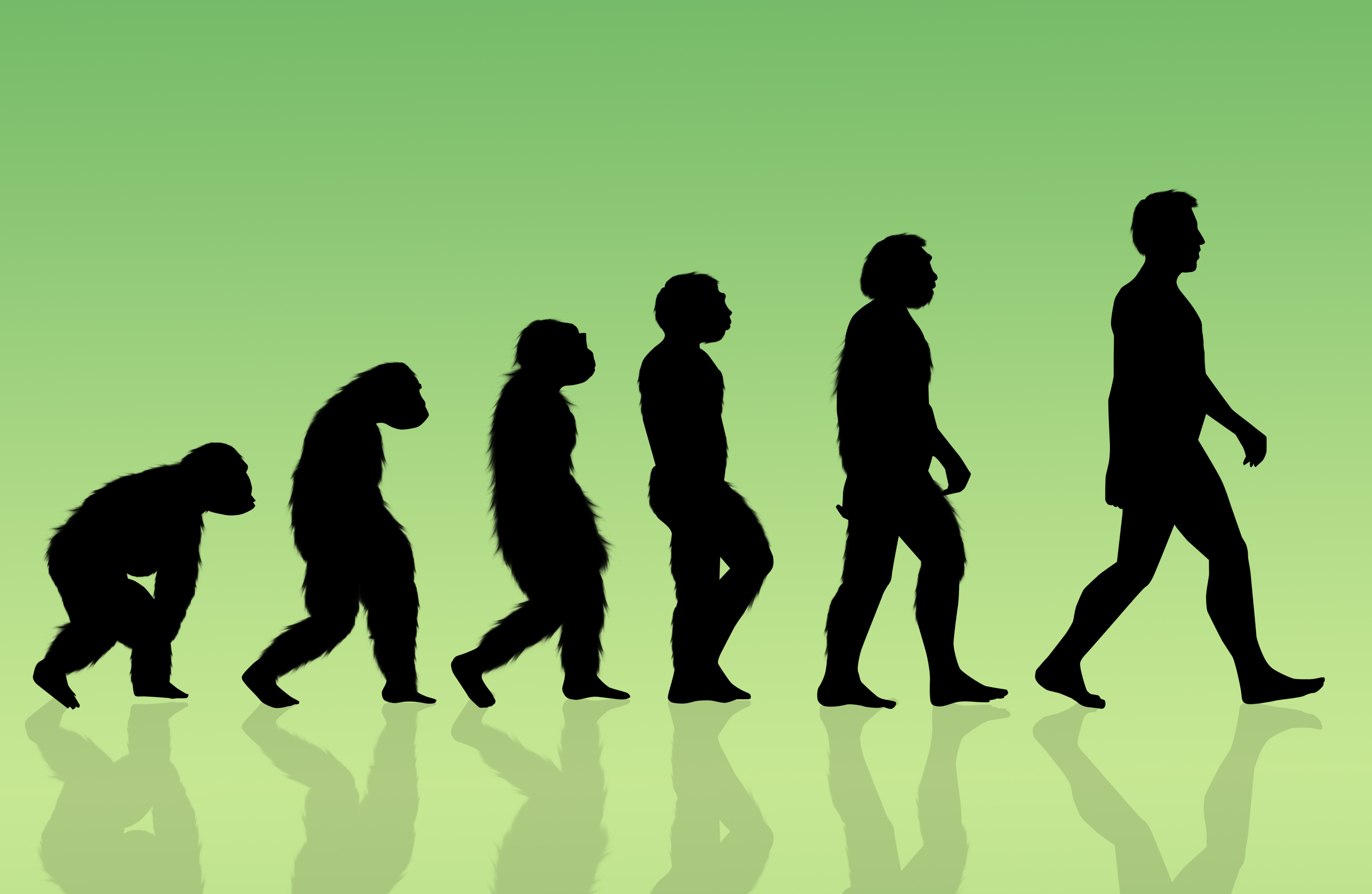 Эволюция человека от обезьяны картинка