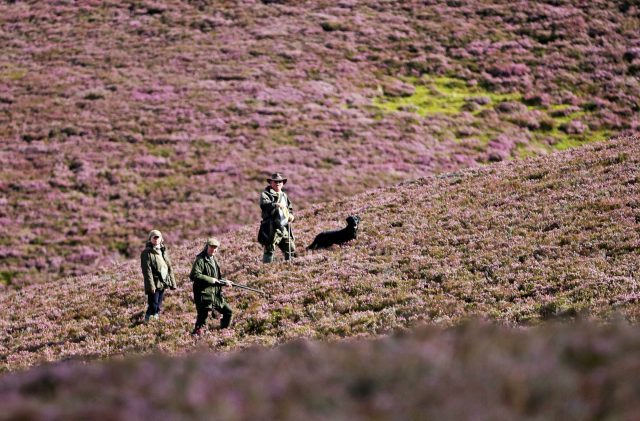 Shooters can be seen amongst the heather on the Alvie Estate (Jane Barlow/PA)