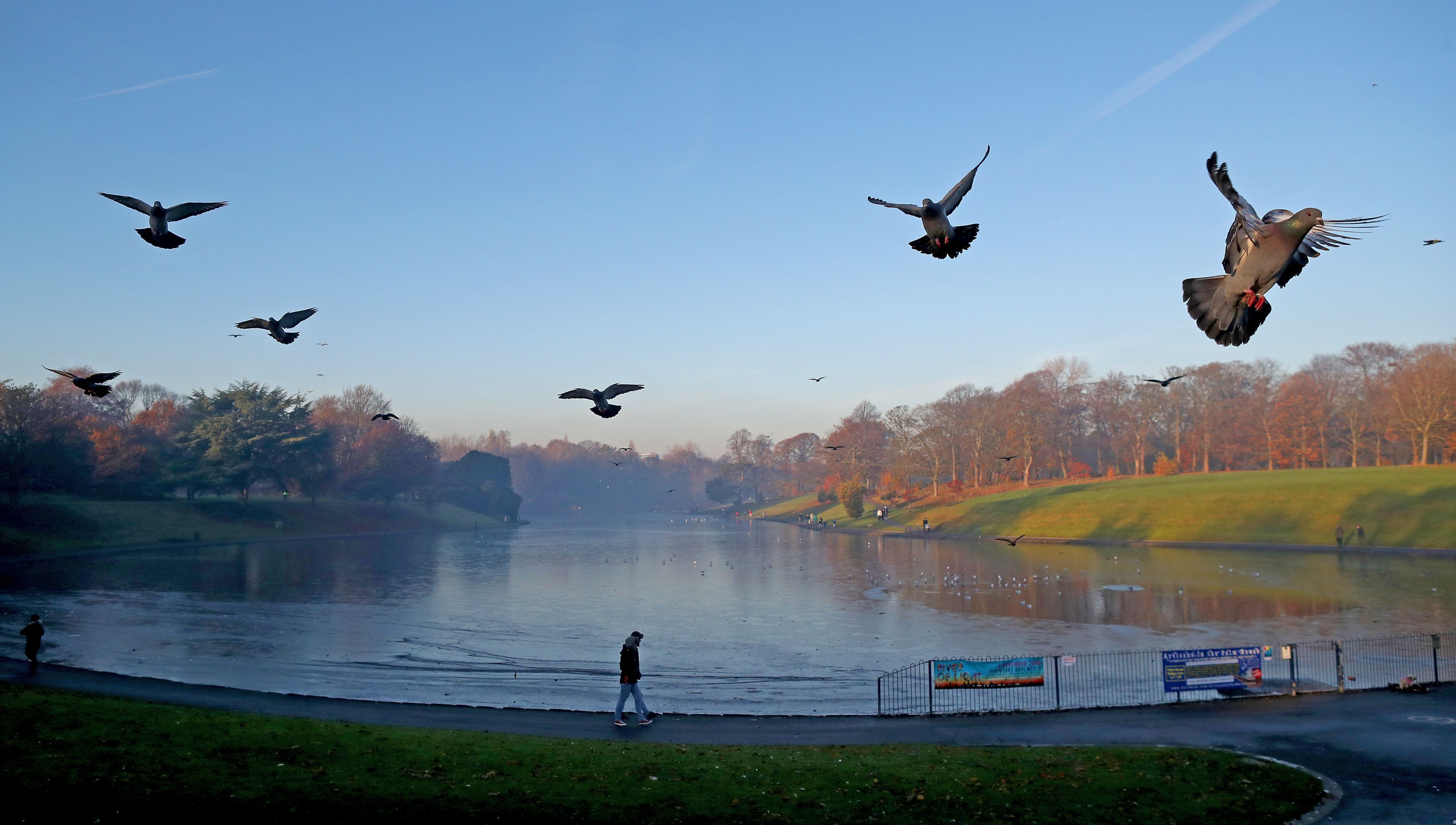 Pigeons fly above a mist covered lake in Sefton Park