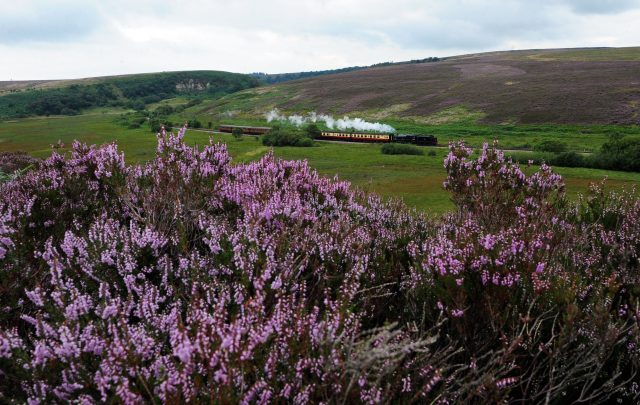 A steam train makes its way past the flowering purple heather at Fen Bog Nature Reserve on the North Yorkshire Moors Railway (Anna Gowthorpe/PA)