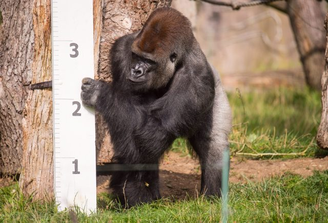 Over 200 animals at London Zoo await their annual weigh