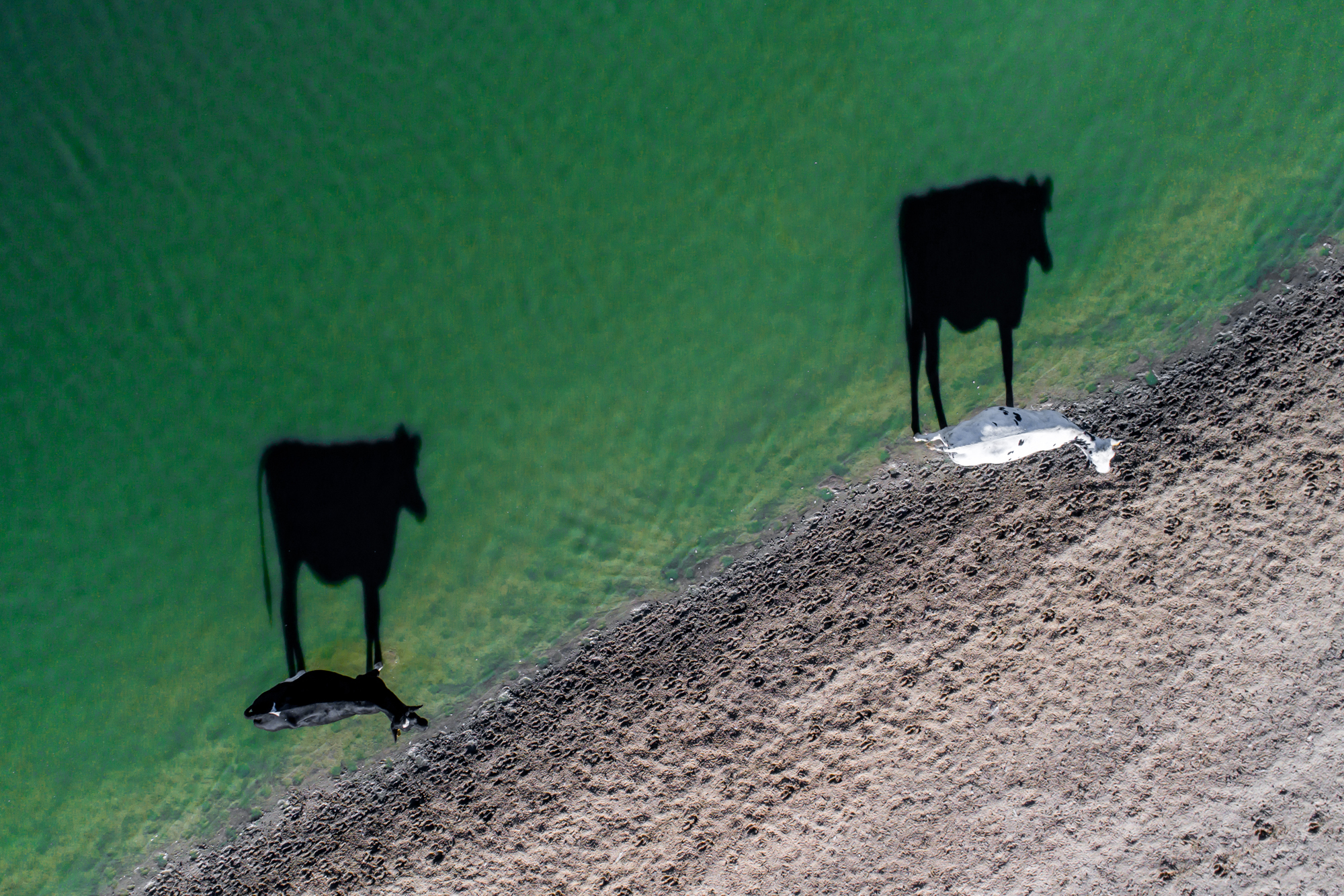 2nd place in the Creativity category Two Moo by Luke Bell (Luke Bell/Dronestagram)