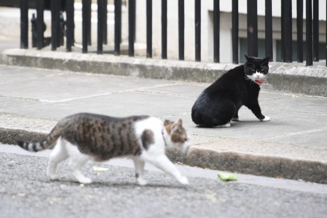 Chief Mouser for the Foreign Office Palmerston watches Larry the Downing Street Cat. (Victoria Jones/PA)