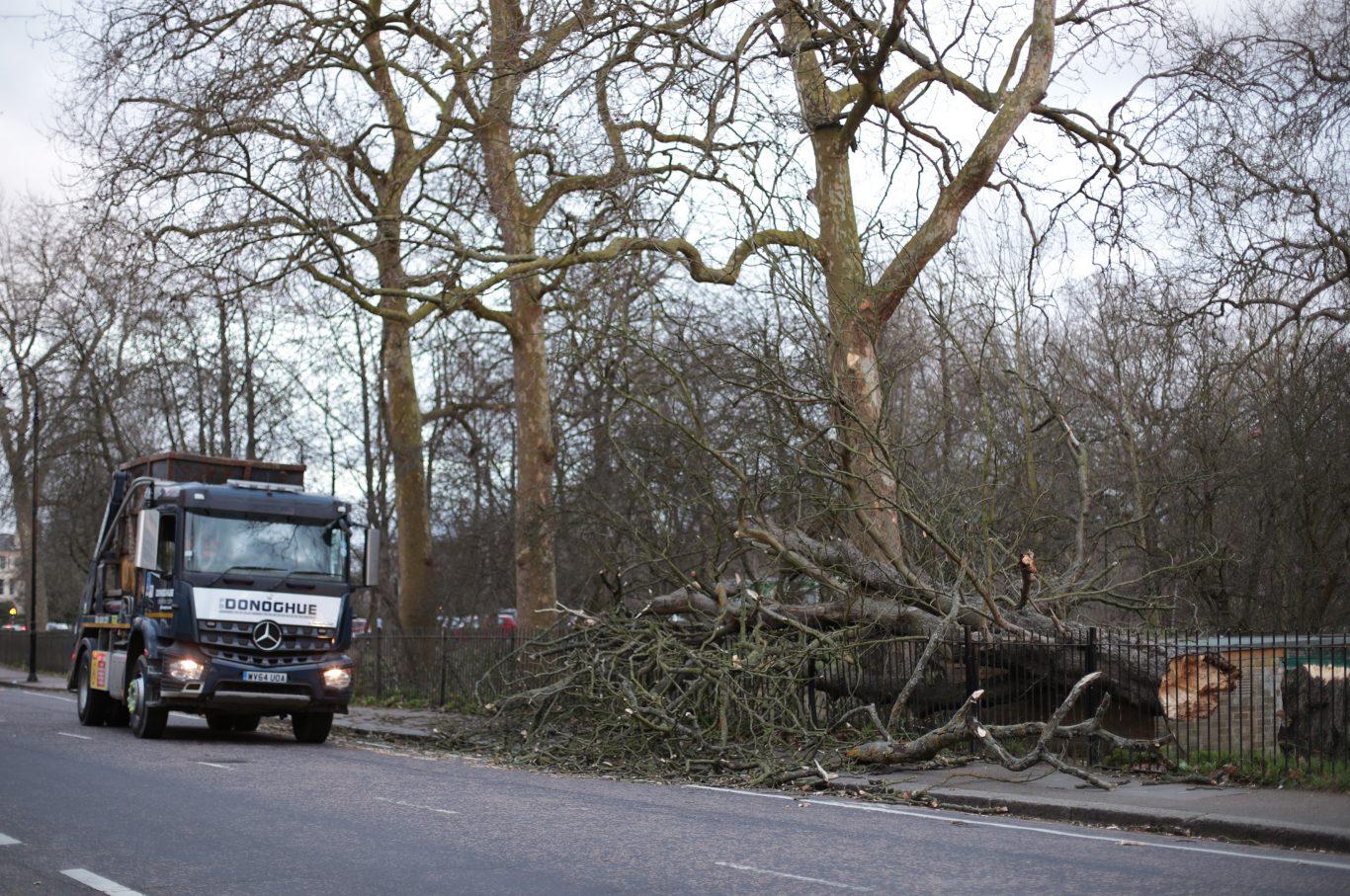 A fallen tree in Regent's Park, London, after Storm Doris reached nearly 90mph  (Yui Mok/PA)