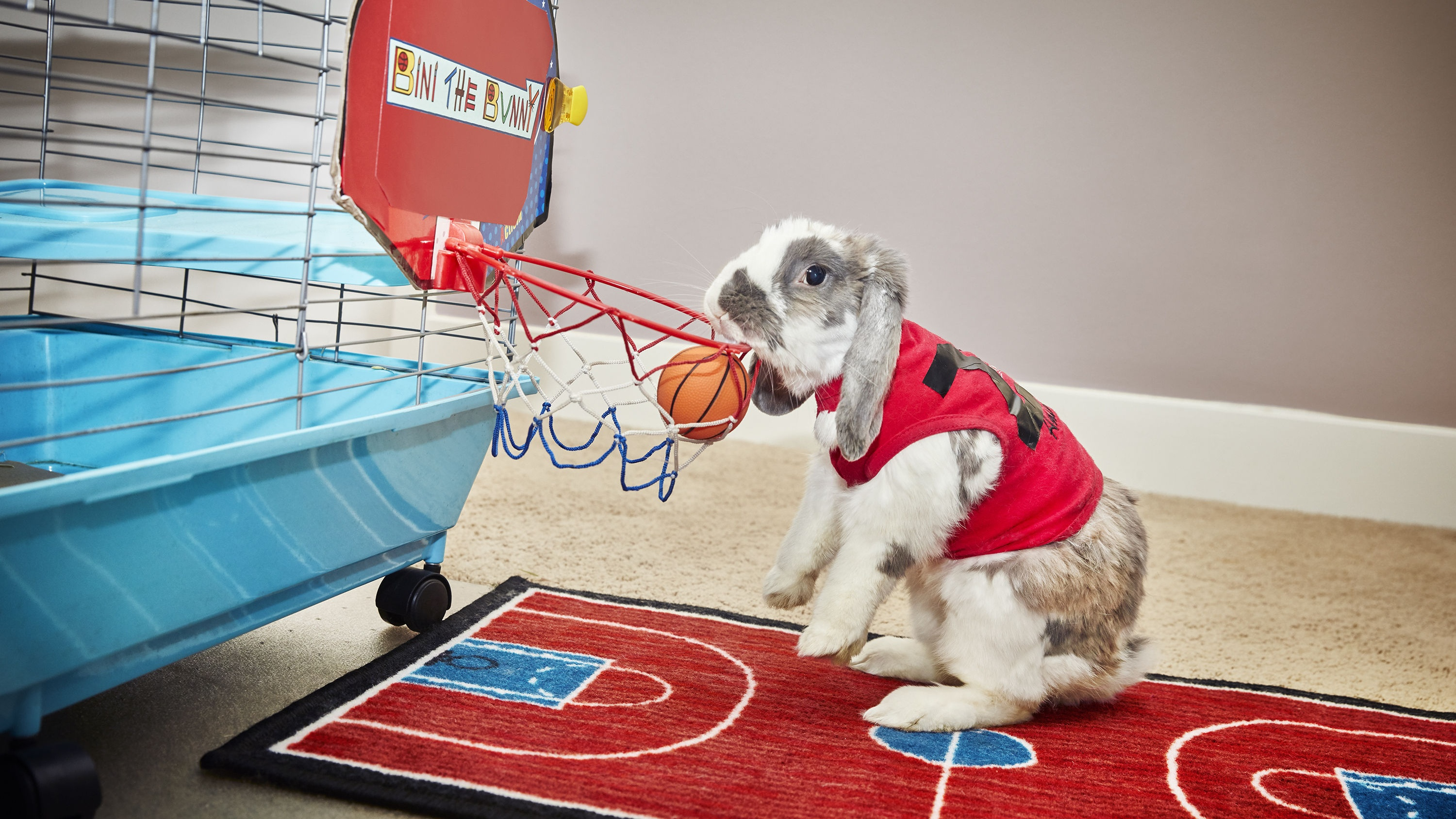Bini The Bunny is a basketball legend