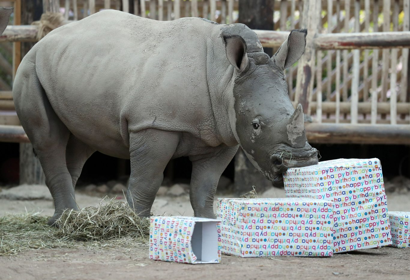 Bonnie enjoys her birthday presents (Andrew Milligan/PA)