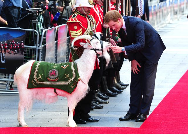 Prince Harry and the goat