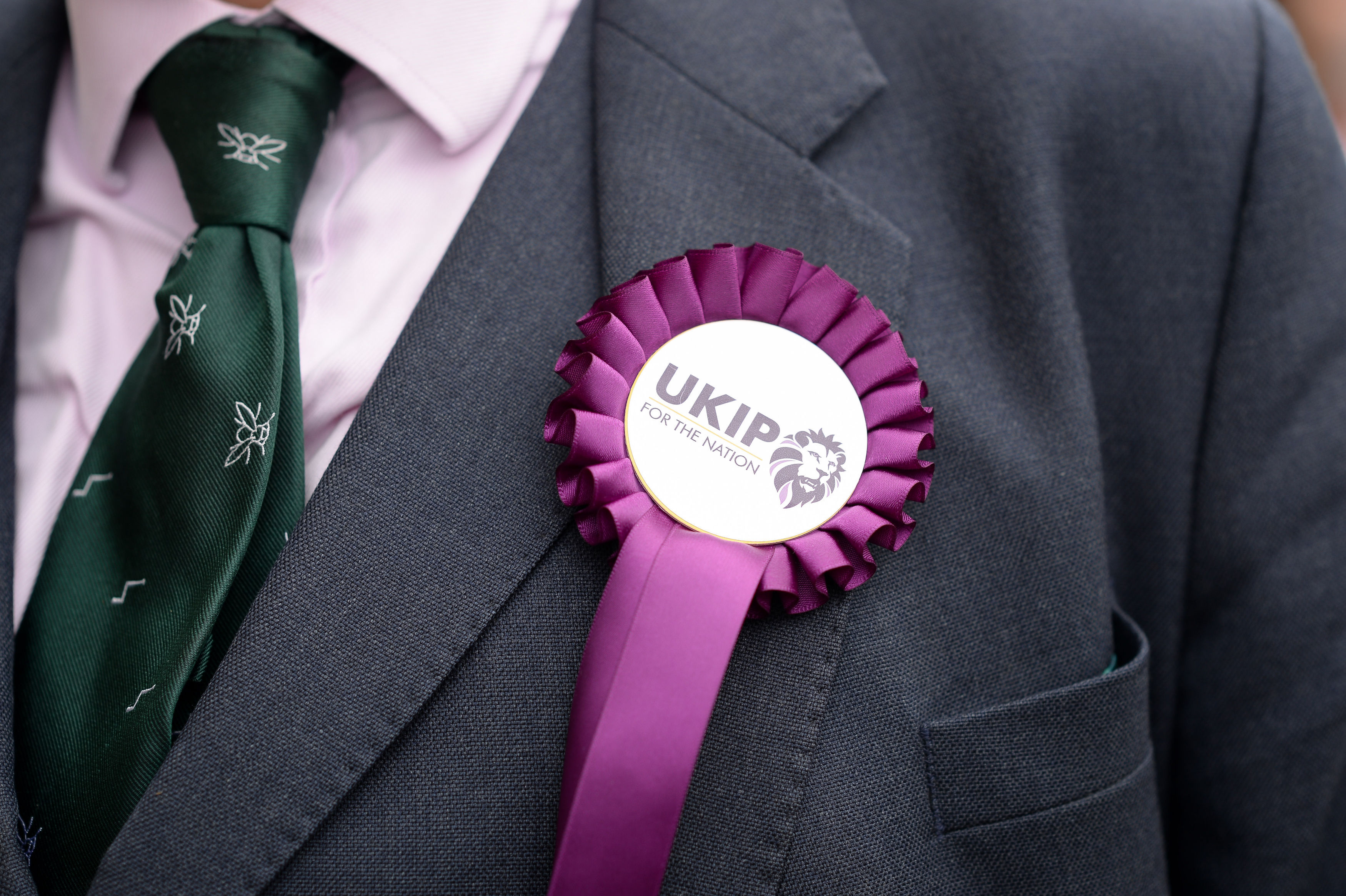 The Ukip logo on a rosette