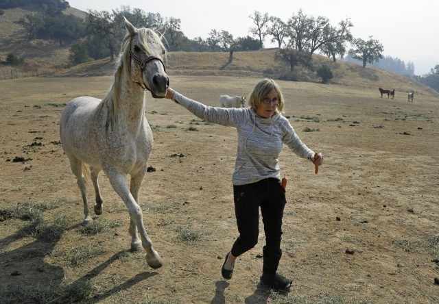 A woman leads a white horse away