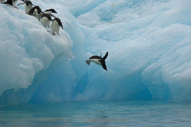 Penguins die in 'catastrophic' season