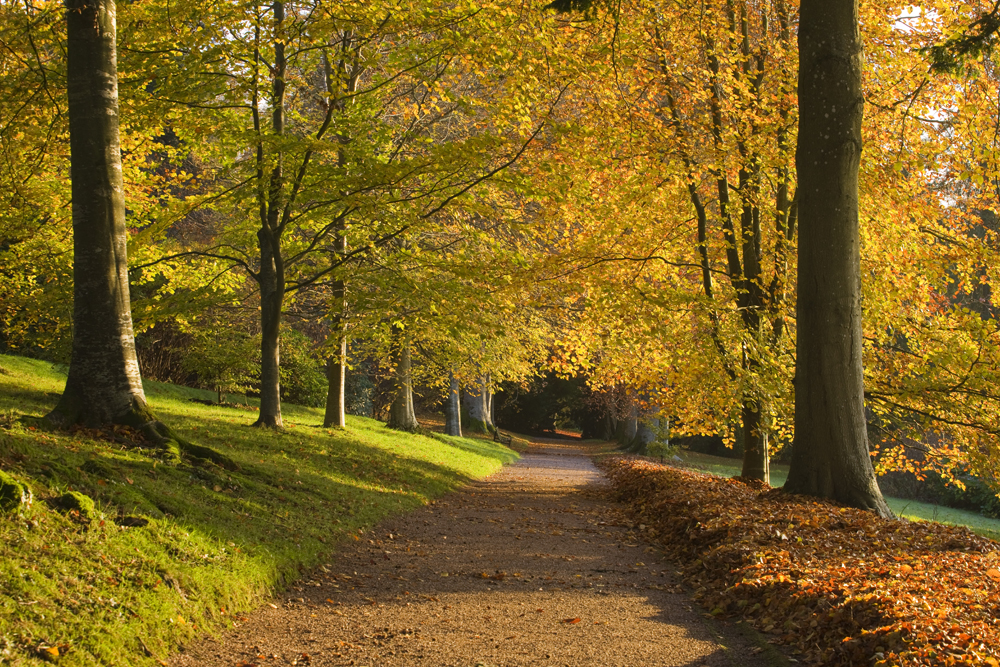 An avenue of autumnal beech trees at Killerton (Clive Nichols/National Trust/PA)