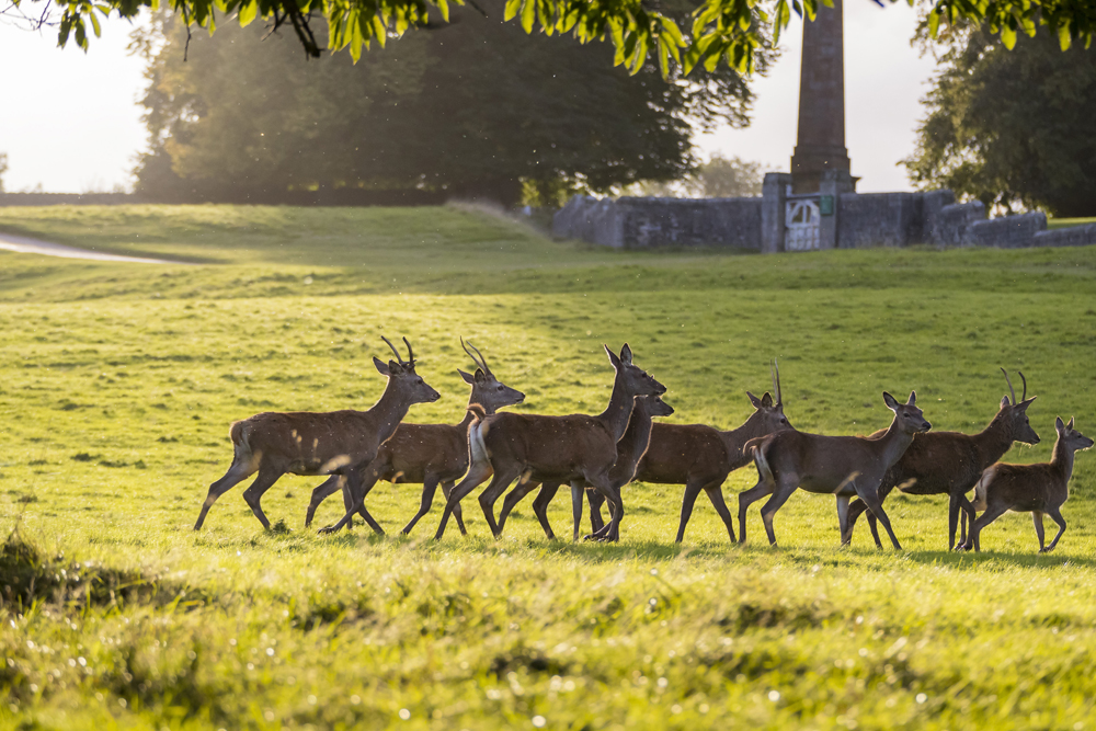 A herd of deer at Fountains Abbey (Chris Lacey/National Trust/PA)