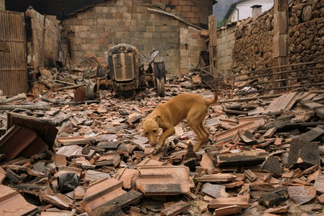 A dog moves among the debris of a burnt warehouse near Penacova, northern Portugal