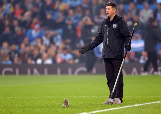 A squirrel causes havoc at the Etihad