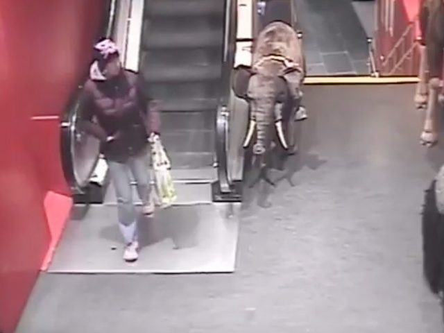 CCTV image showing Karen Brown at Hamleys in London