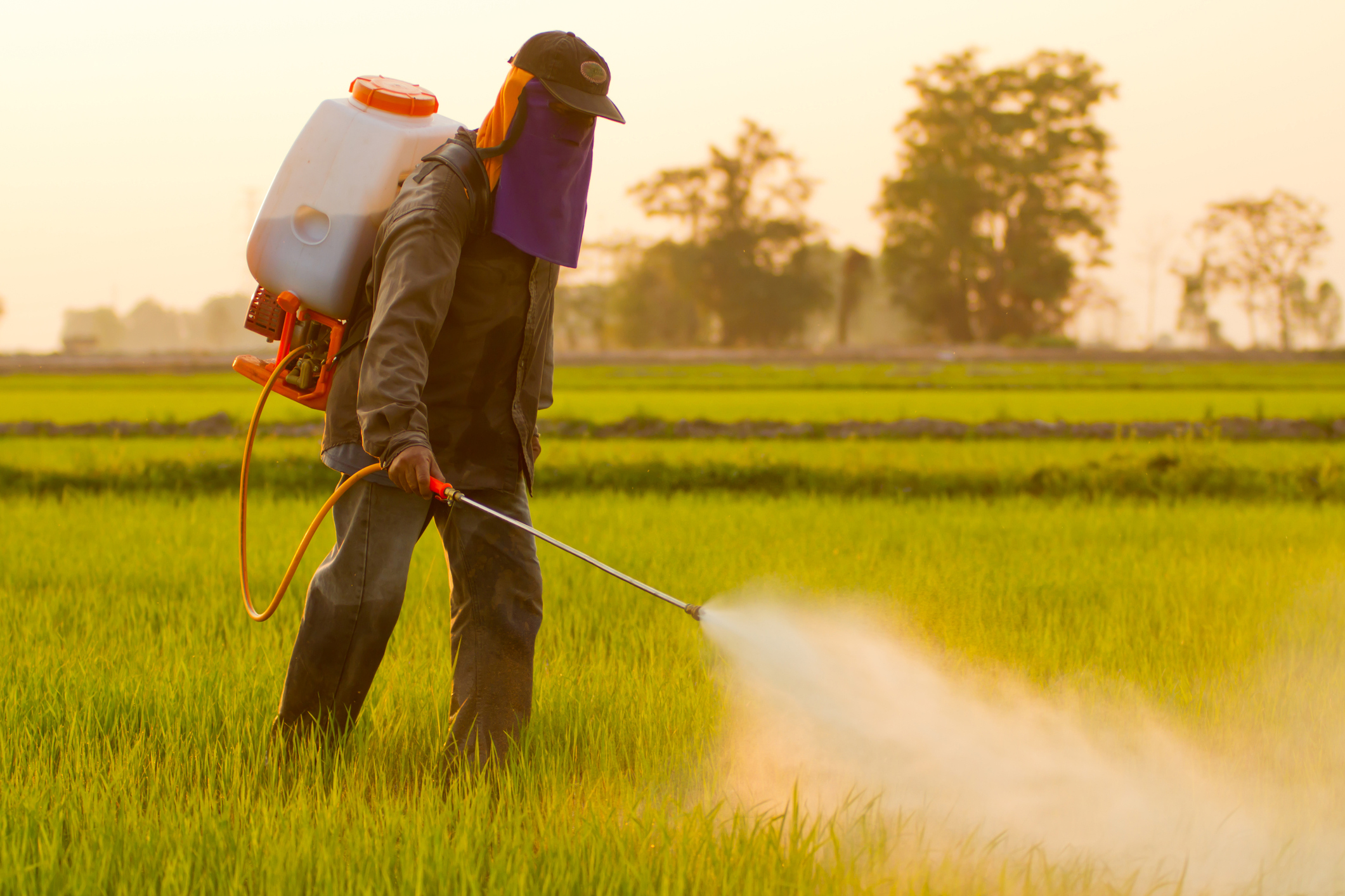 Farmer spraying pesticide.