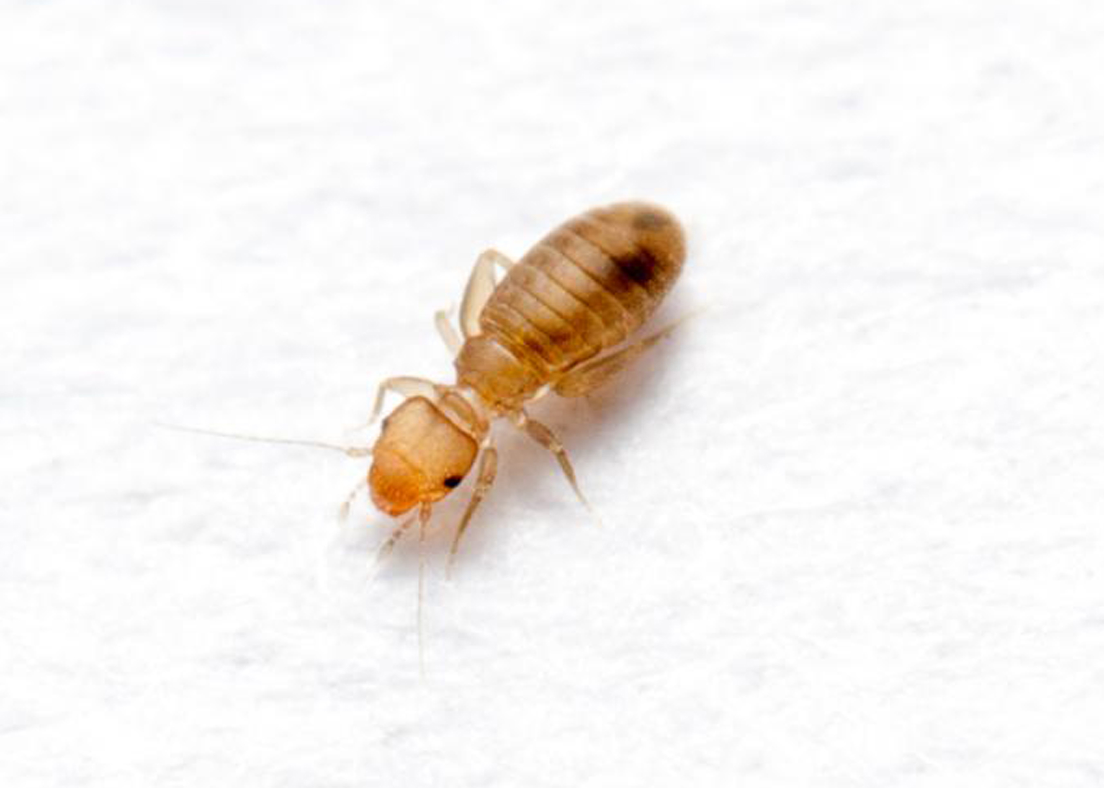5 Things You Need To Know About The Bugs Secretly Living In Your House The Irish News