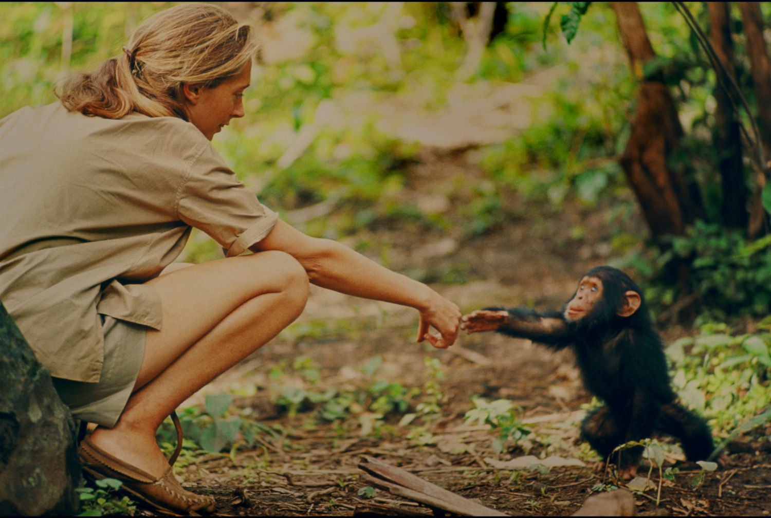 Goodall meets a young chimp.