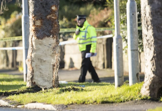 Police at the scene where a stolen car crashed into a tree