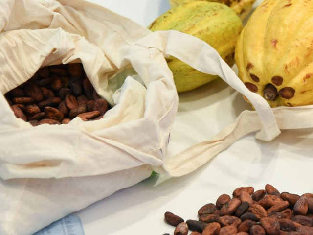 Cocoa beans in the Bournville factory
