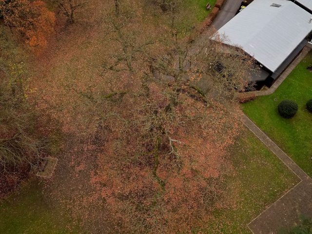 An aerial image of the oak tree at the Scout Association's Gilwell Park in Chingford (Woodland Trust/PA)