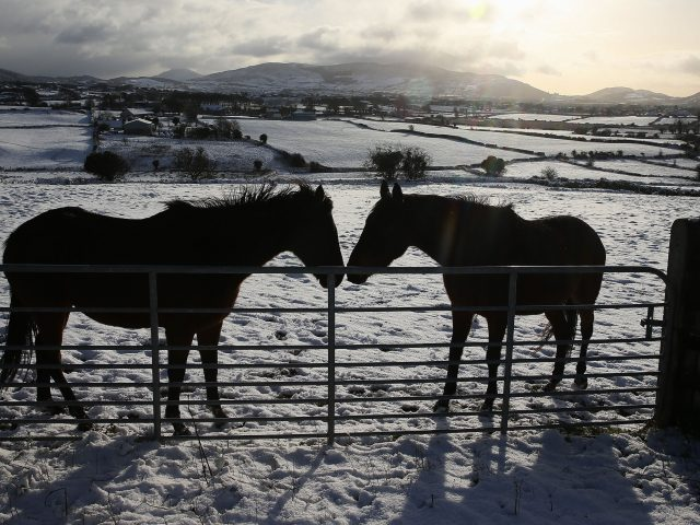 Horses in Cloughoge, Newry (Brian Lawless/PA)