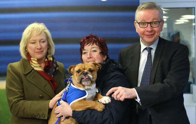 Mr Gove meets Enid the bulldog at Battersea Dog's Home (Philip Toscano/PA)