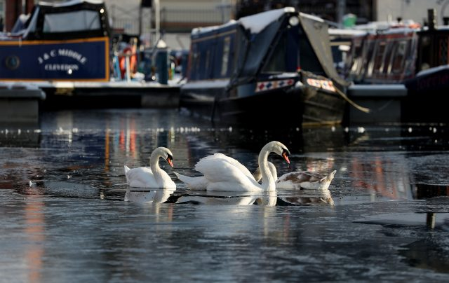 Swans were surrounded by ice in the Diglis Canal Basin in Worcester (David Davies/PA)