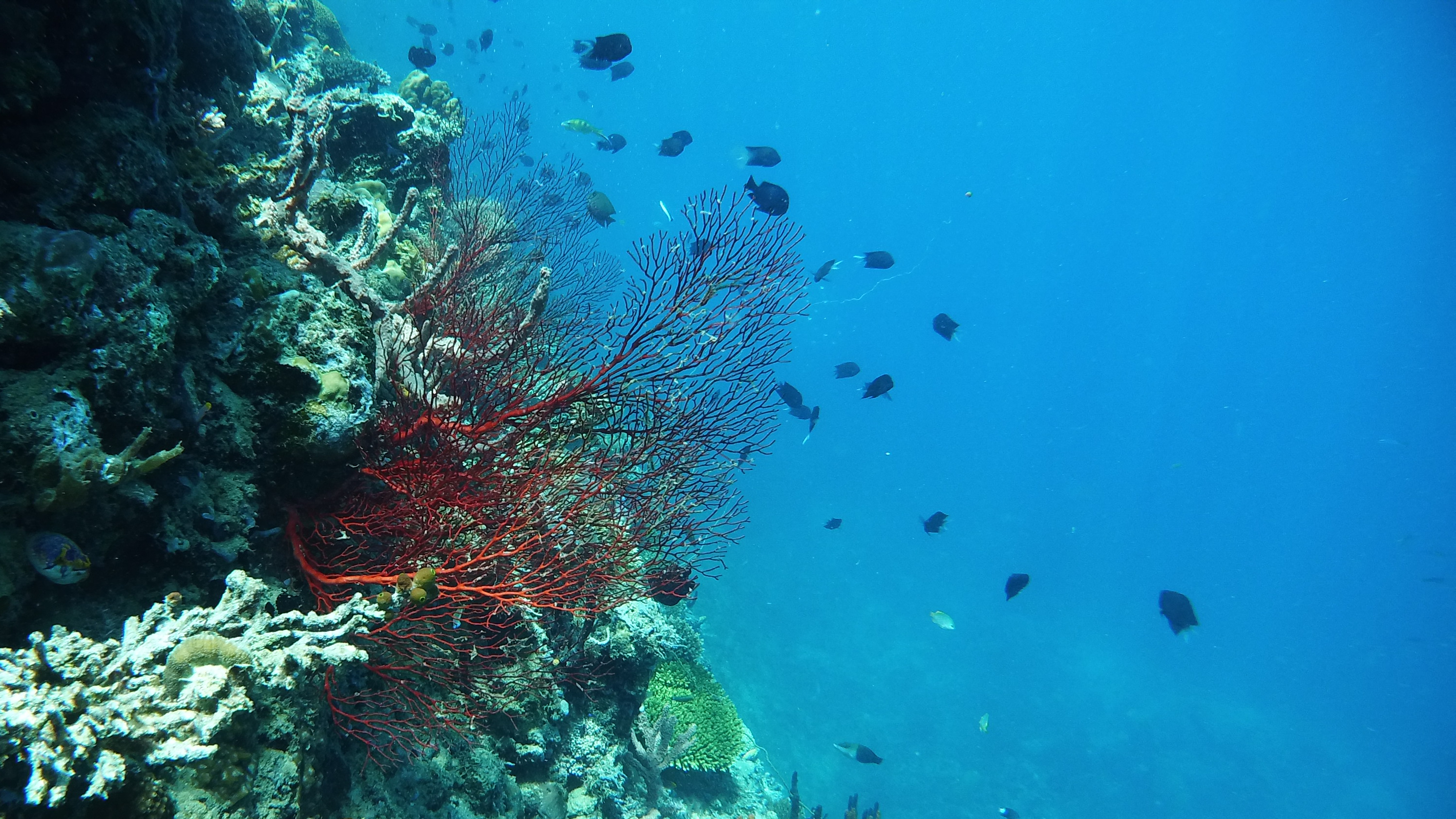 A gorgonian sea fan (Renato Granieri/PA)