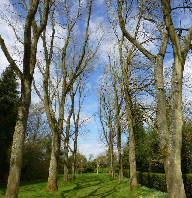 The Whipsnade Tree Cathedral in Dunstable, Bedfordshire (Historic England/PA)