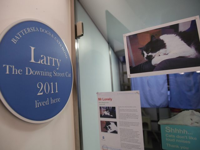Plaque marking the rehoming to Downing Street of Larry the cat