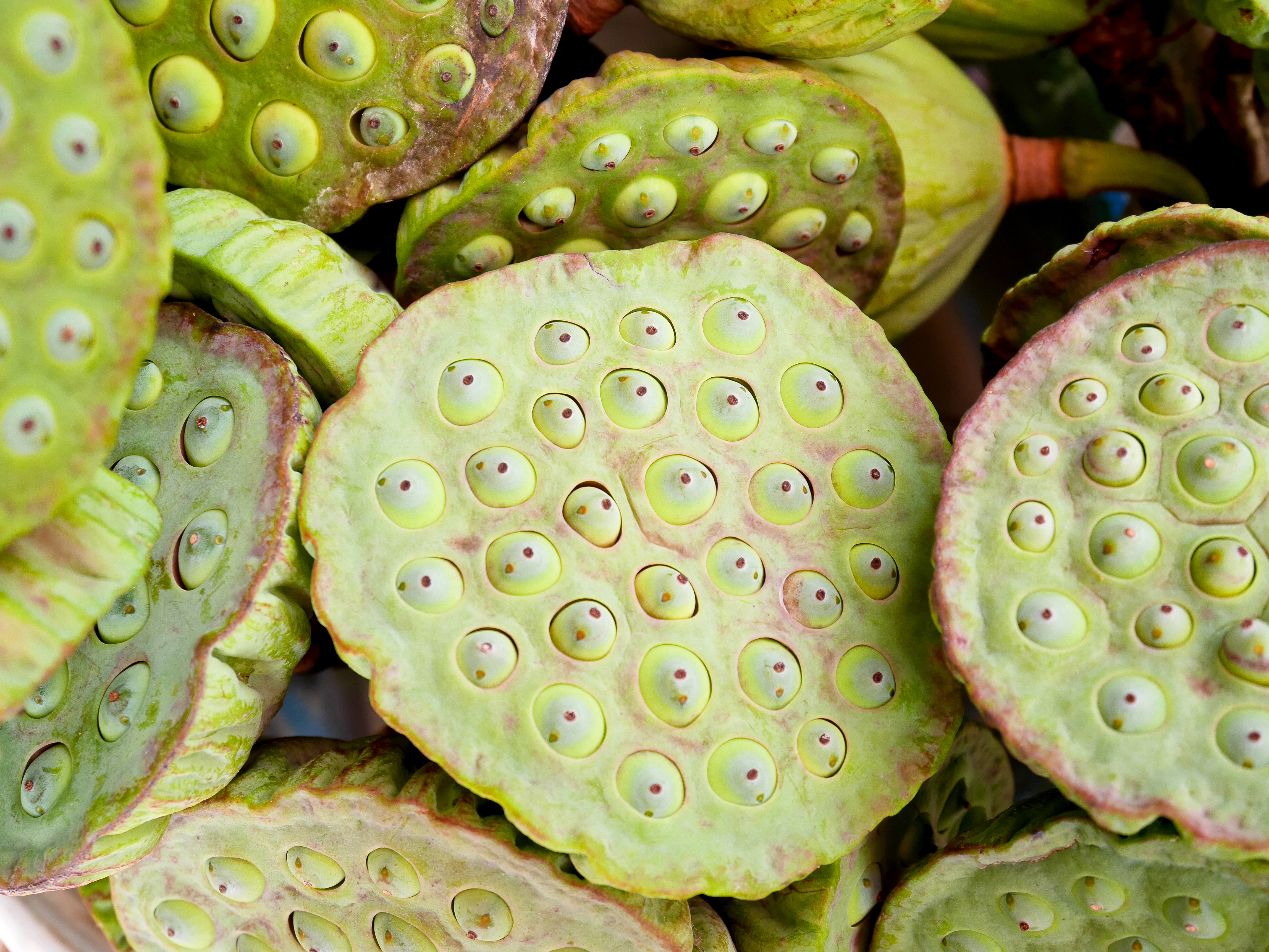 Trypophobia May Not Even Be A Phobia At All New Study Suggests
