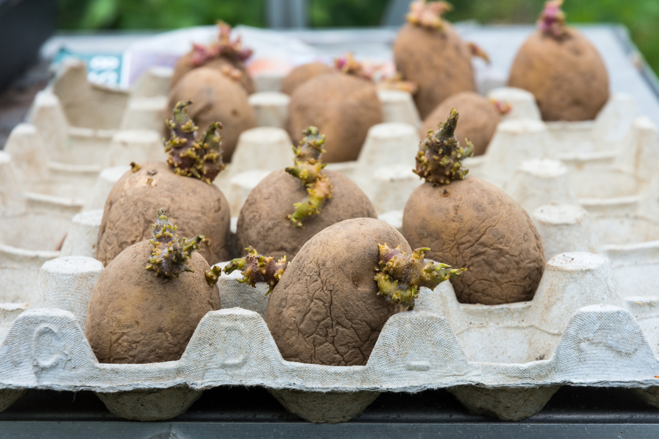 How To Grow Your Own Potatoes In 7 Simple Steps