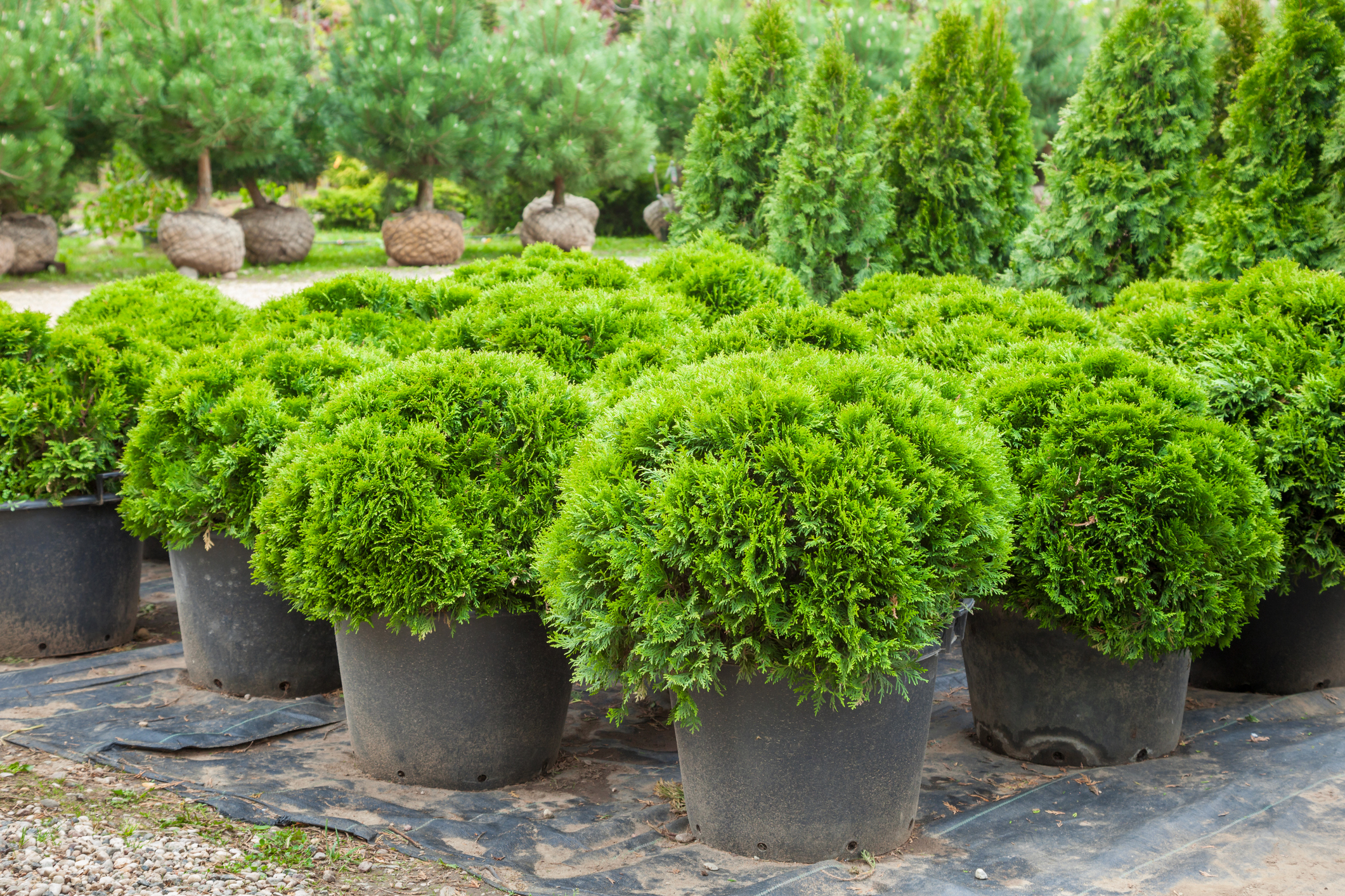 dc3f916f-4531-429c-9575-613a016d6473 Garden Design With Yew Hedge And Planter on