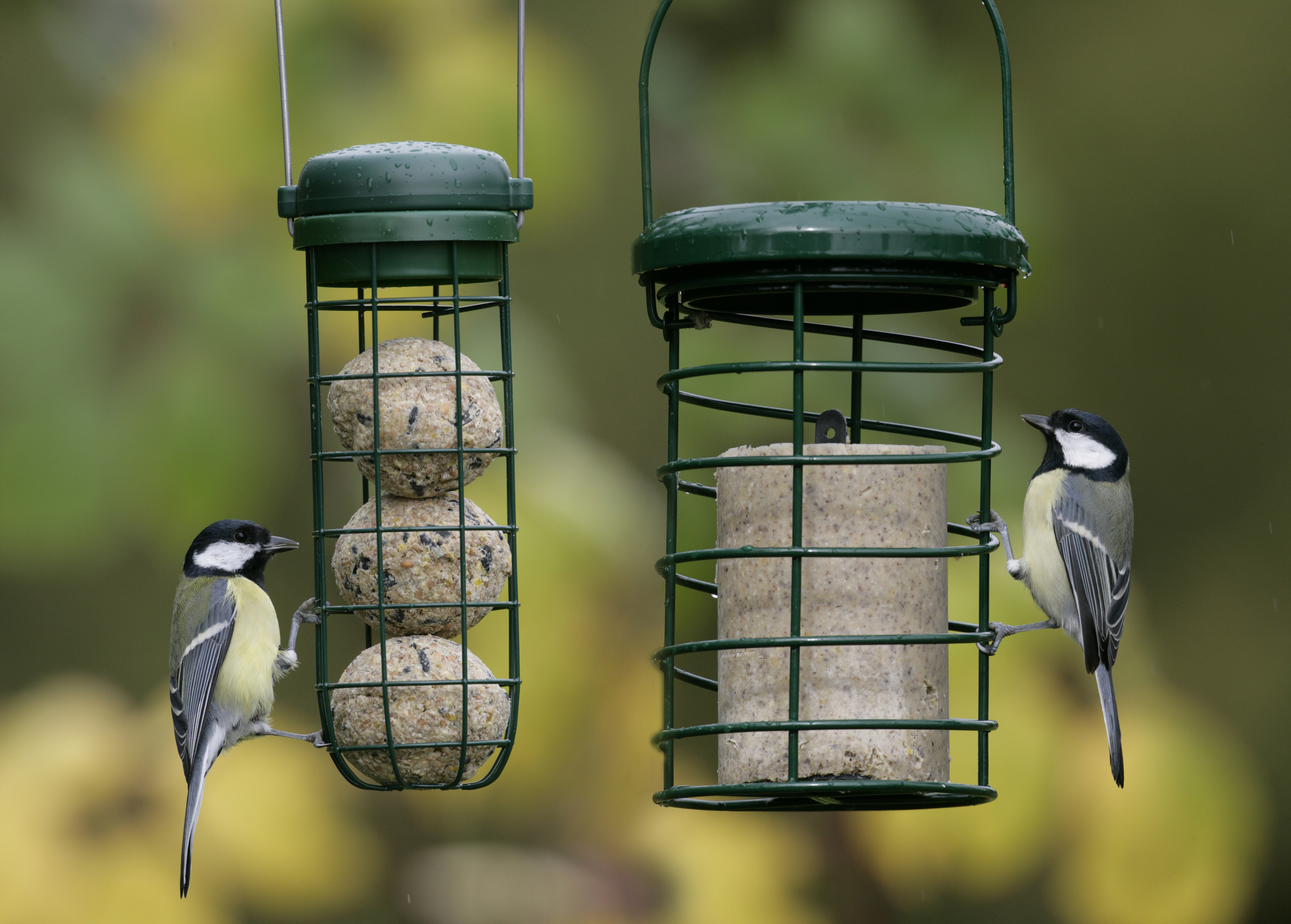 How To Create Your Own Bird Caf 233 Ahead Of The Big Garden