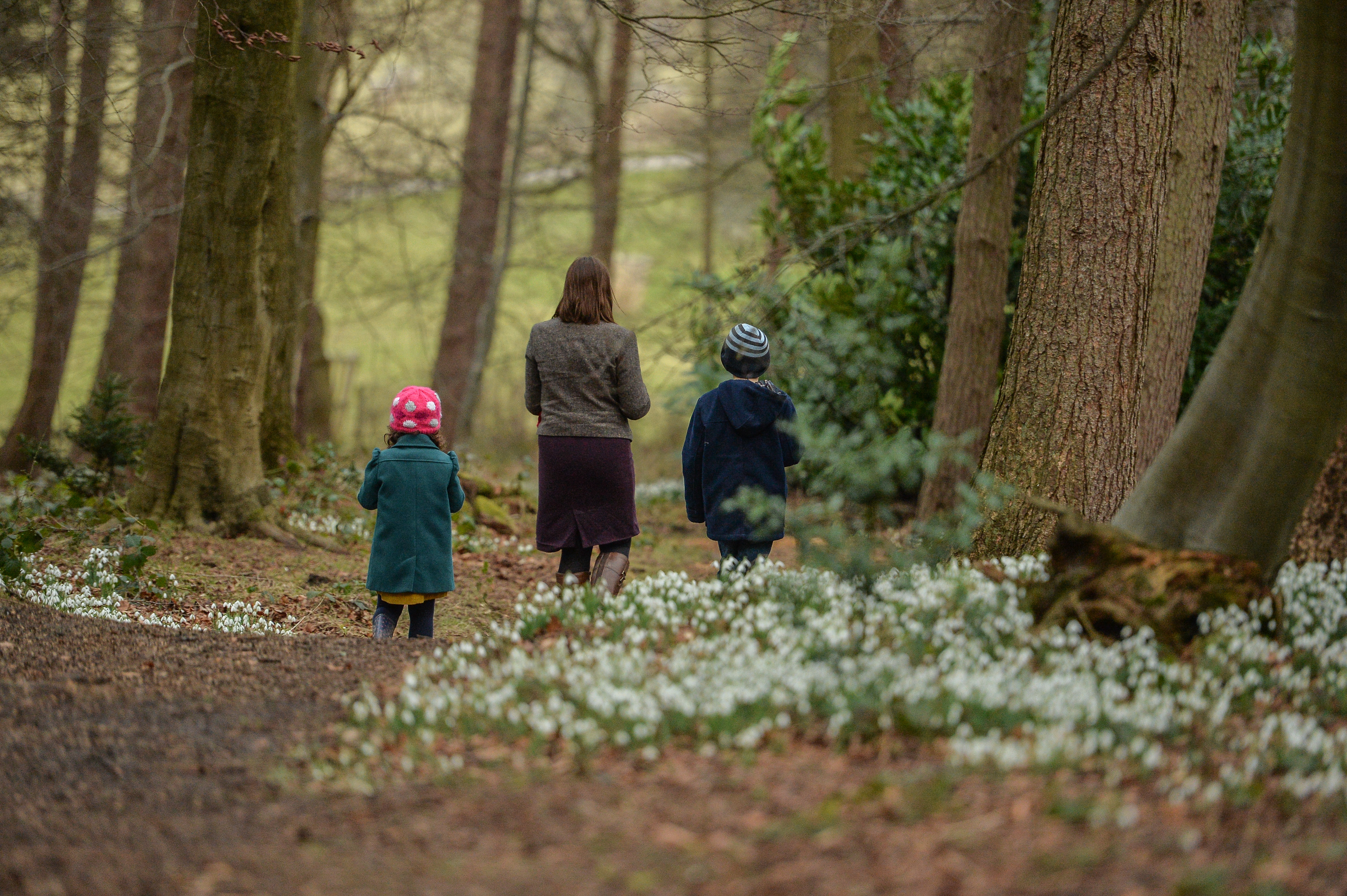 Chirk Snowdrop Trail (National Trust Images/PA)
