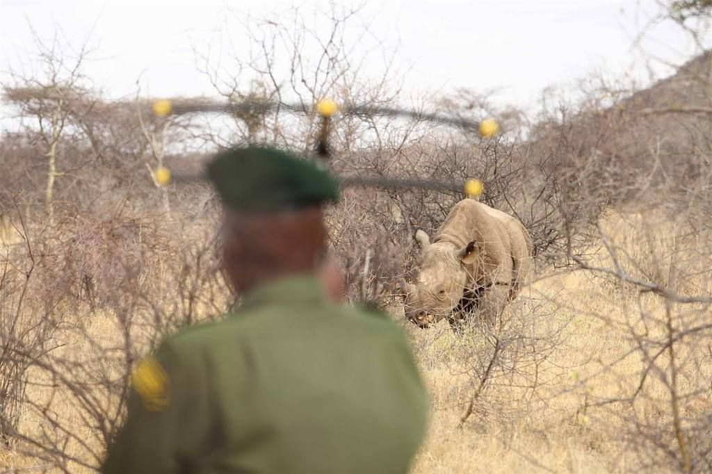 Tracking rhino in the Sera Conservancy