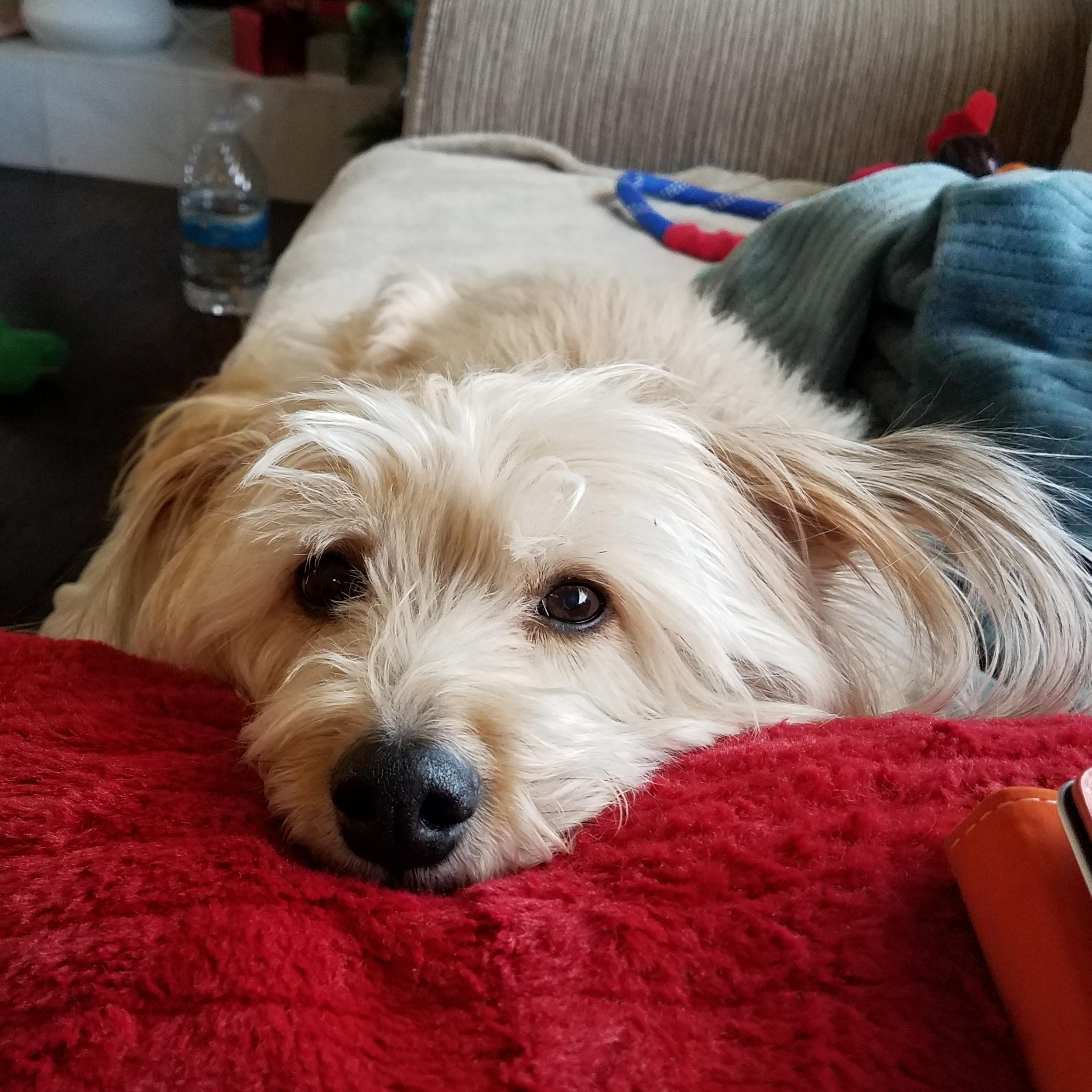 Fantastic Fluff Ball Adorable Dog - 77121b6a-0b55-4296-a089-335af1c94222  Best Photo Reference_603030  .jpg