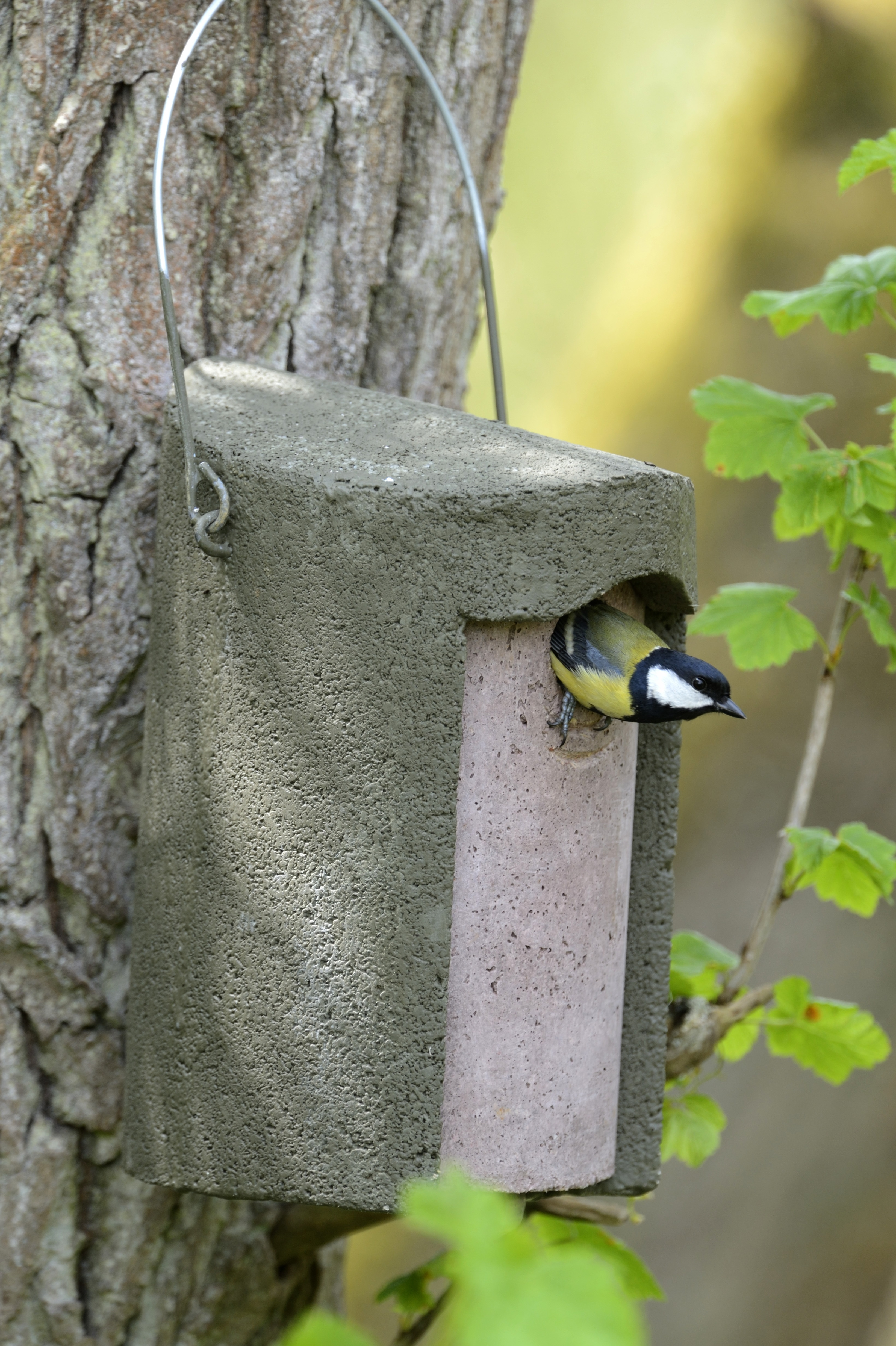 A great tit shelters in an insulated nest box. (Jacobi & Jayne/PA)